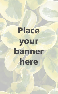 Place your banner here