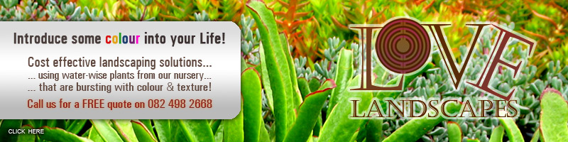 Cost effective landscaping solutions using water-wise plants!