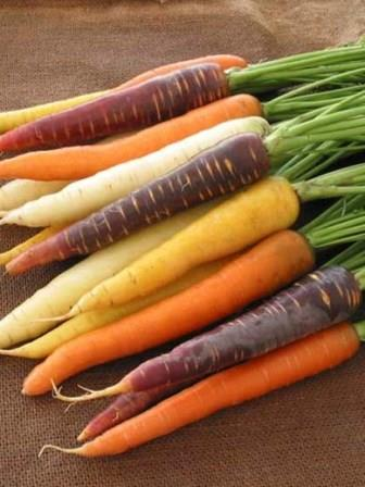 Carrot 'Rainbow Mix' Picture courtesy Ball Straathof