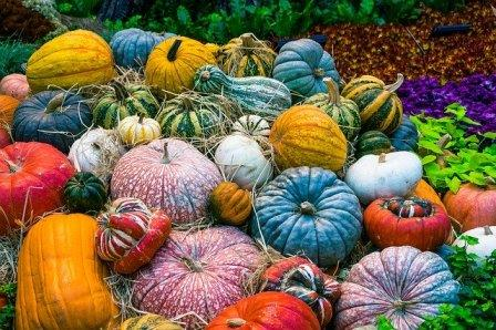 Pumpkins Image by Maxx Girr from Pixabay