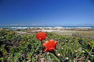 Cape Agulhas Dune Fynbos - Overberg. Picture courtesy South African Tourism. Visit their flickr page