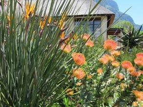 Kirstenbosch Botanical Gardens. Picture courtesy Thomas Guillem. Visit his flickr page.