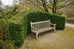 Buxus Hedge & Teak Bench. Picture courtesy Karl Gercens. Visit his flickr photostream