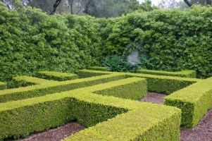 Boxwood Hedge. Picture courtesy Karl Gercens. Visit his flickr photostream