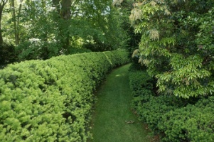 Curved Taxus Hedge. Picture courtesy Karl Gercens. Visit his flickr photostream