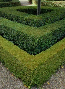 Three Edge Hedge. Picture courtesy Karl Gercens. Visit his flickr photostream
