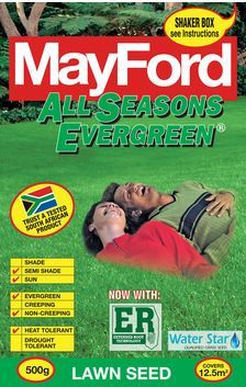 Mayford 'All Seasons Evergreen'