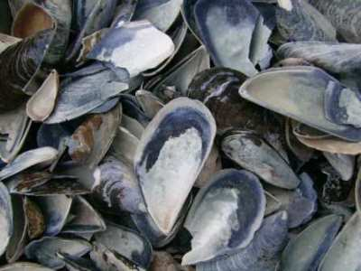 Blue Sea Shells. Picture courtesy Stone & Bark www.msnb.co.za/index.php