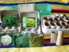 Germinate vegetable seeds using re-cycled household items.