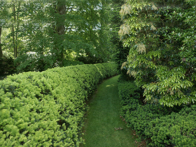 Growing hedges will provide valuable privacy & windbreaks