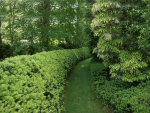 Growing Hedges
