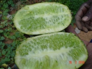 Pierced busty german mature wit a cucumber