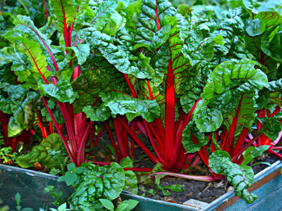Frugal vegetable gardening tips