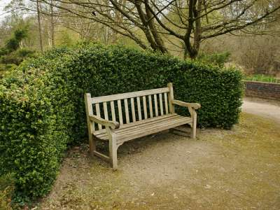 Large plants for formal & informal hedging and screening