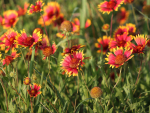 Small plants to colour your garden from mid to late summer & autumn