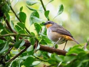 How to attract birds and other wildlife to your garden